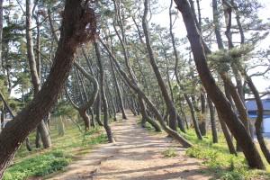 3_町民の森