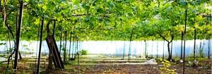 写真提供:マルワ農園