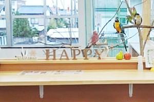happy_owner_001